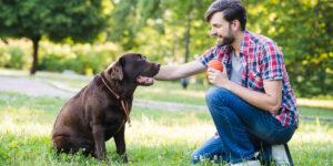 Giochi con cani: Quali sono e come farlo divertire